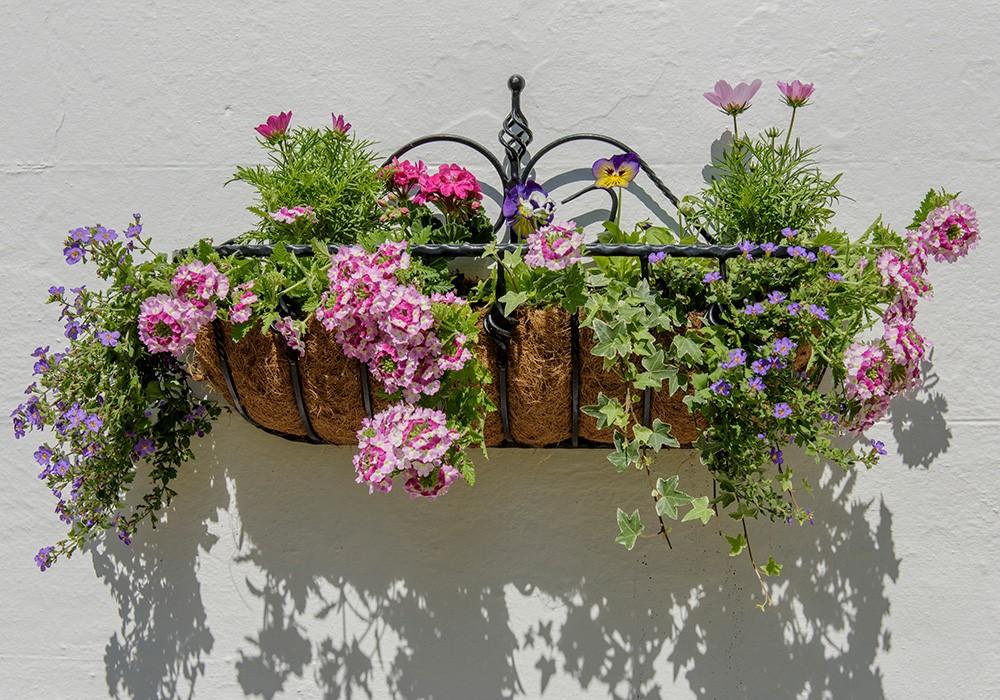 Planten in mandjes aan de muur in de tuin